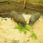 Turistična kmetija pri Lazarju - Ekskurzije za šolarje